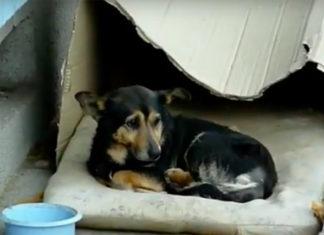 Abandonné et ignoré, ce chien vivait dans une boite en carton … attendez de voir ce qui lui est arrivé ! | MiniBuzz