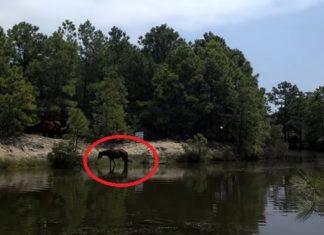 Lors d'une partie de pêche, il voit un cheval sauvage se baigner… Attendez de voir quand les autres chevaux arrivent !│MiniBuzz