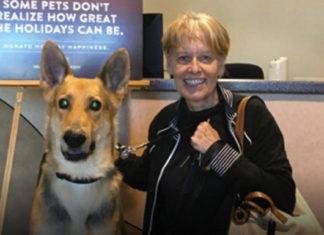 Un chien aveugle délaissé adopté