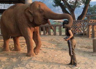 Cette femme commence à chanter au côté de cet éléphant… Attendez de voir sa réaction ! │MiniBuzz