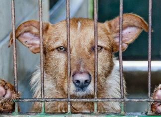 Condamnés à 50 ans de prison pour torture sur les animaux