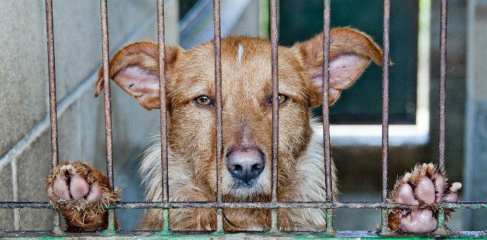 Condamnés à 50 ans de prison pour acte de torture sur les animaux