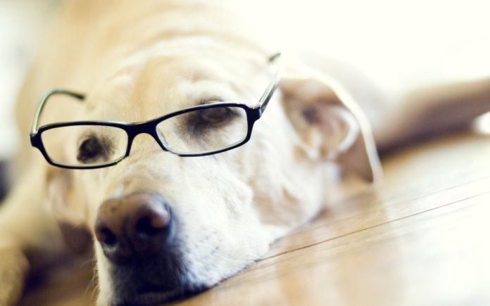 5 photos qui prouvent que les labradors sont des chiens tant appréciés