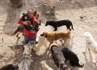 Il achète un abattoir à chien et sauve 2000 animaux