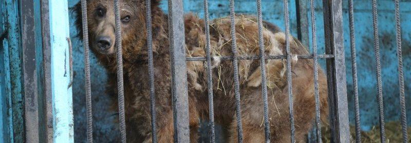 Abandonnés dans un zoo, ces animaux sont laissés à eux-mêmes… (VOIR LA SUITE)