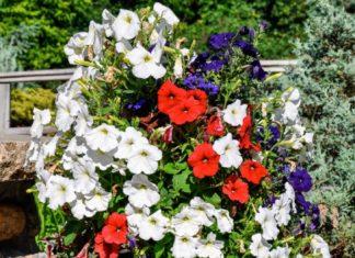 Il Enterre Un Tube En Plastique Dans Le Pot: Voici Donc Une Brillante Idée Avoir Des Plantes Luxuriantes | Minibuzz