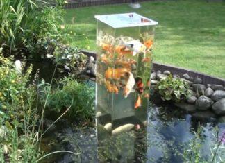 Un homme place un aquarium à l'envers dans son étang… Attendez de voir les poissons dans cette vidéo ! Ils ont l'air heureux.│MiniBuzz