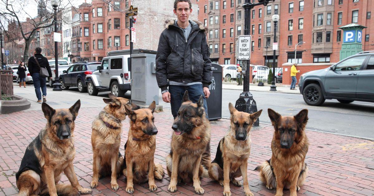 Il s'aventure dans la rue avec sa meute de chiens sans laisses. Regardez leur comportement étonnant
