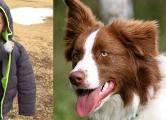 Ce jeune garçon a perdu son chien depuis plus d'un mois… Attendez de voir sa réaction lorsqu'il le retrouve ! | MiniBuzz