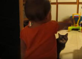 Une petite fille s'approche de son chat : ne manquez pas leur conversation hilarante