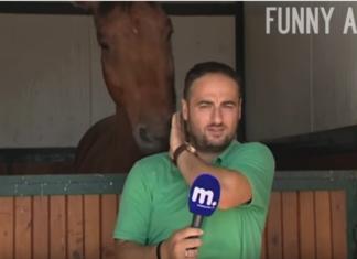 Ce journaliste essaye de faire son travail, mais le cheval dans son dos n'est pas prêt à le laisser tranquille. Une scène hilarante !