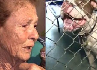 Une femme de 83 ans se fait attaquer par des chiens errants… Attendez de voir la suite !│MiniBuzz