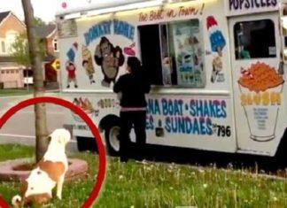 Ce chien fait la queue pour avoir une glace… Attendez de voir quand son tour arrive! Wow!│MiniBuzz