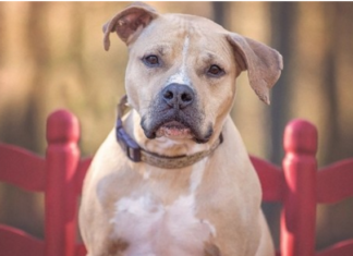Un chien meurt après avoir été traîné par une voiture à Crécy-en-Ponthieu