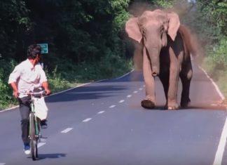 Maman éléphant Bloque La Circulation Pendant Quelques Minutes. Peu De Temps Après, On Comprend Pourquoi...│MiniBuzz