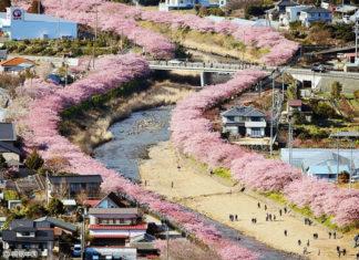 Les cerisiers viennent juste de fleurir dans ce village japonais et les photos sont magiques ! | Minibuzz