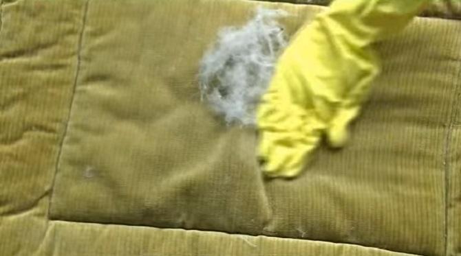 Retirer les poils des animaux du canapé ? Voilà le meilleur moyen de le faire.