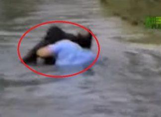 Il sauve la vie d'un singe en train de se noyer… attendez de voir son geste courageux !│MiniBuzz