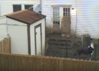 Il filme pendant six semaines le chien du voisin: ce qu'il découvre est déchirant