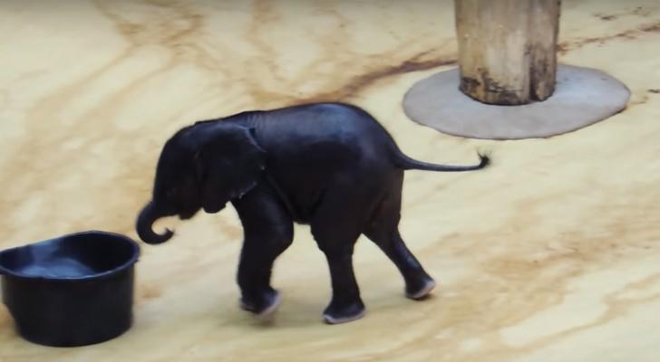 Un Petit éléphant Voit Un Bassin D'eau: Ses Jeux Sont Hilarants!