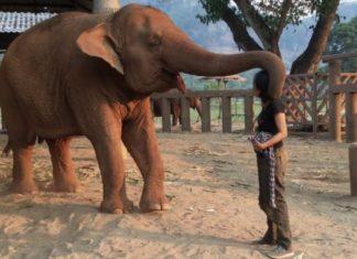Elle S'approche De L'éléphant Et Commence à Chanter: Voici Comment L'animal Réagit ... Wow! │MiniBuzz