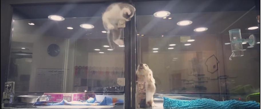 On dirait qu'un chaton fuit de son enclos… Mais ce qu'il va faire vraiment est totalement inattendu
