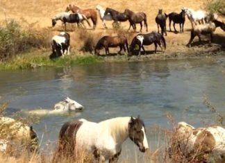 Ces chevaux ont vécu enfermés dans de petites et sombres écuries... Mais voici comment ils vivent aujourd'hui... Wow!│ MiniBuzz