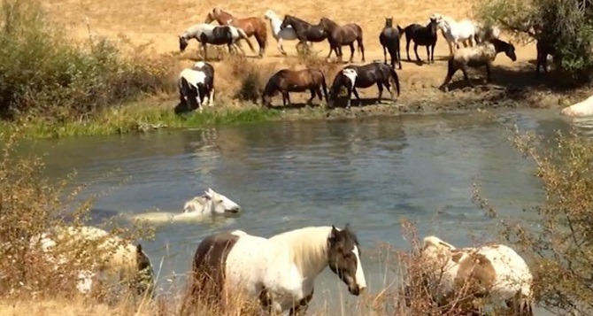Ces chevaux ont vécu enfermés dans de petites et sombres écuries… Mais voici comment ils vivent aujourd'hui… Wow!