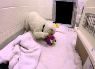 Il a été sauvé des trafiquants de viande canine : le voir jouer pour la première fois est une pure émotion