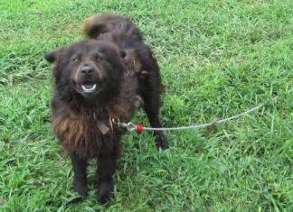 Tous les jours, elle rend visite à cette petite chienne attachée à une chaîne : regardez la neuf ans après!
