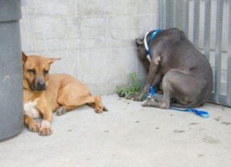 Si Votre Animal Appuie Sa Tête Contre Le Mur Sans Raison, Allez Immédiatement Chez Le Vétérinaire. Voilà Pourquoi | Minibuzz