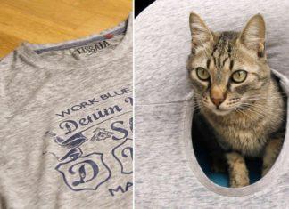 Voici Comment Construire Une Couchette Pour Chats En Utilisant Un Vieux T-shirt | Minibuzz