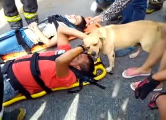 Un homme a été victime d'un accident. La façon dont le chien le console est touchante.│ MiniBuzz