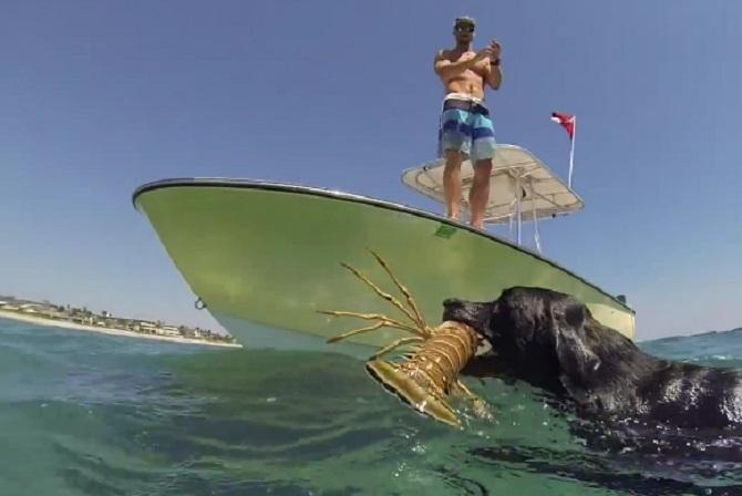 Ce labrador vous surprendra avec sa pêche quotidienne «spéciale»