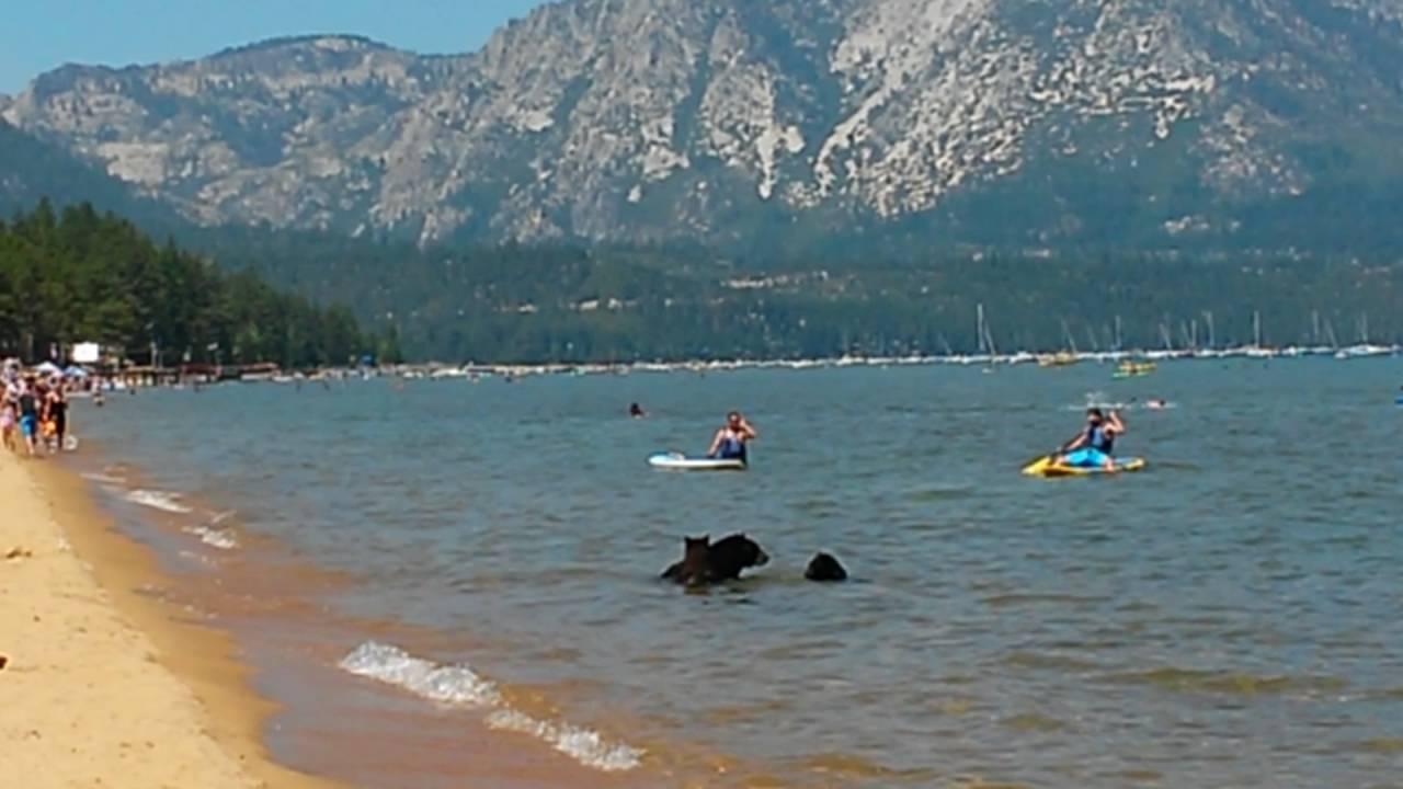 Les baigneurs de ce lac assistent à une scène qu'ils oublieront difficilement…