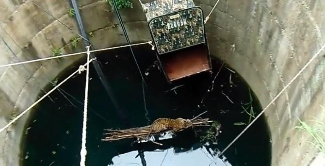Un léopard tombe dans une citerne : L'intervention des citoyens lui sauve la vie.