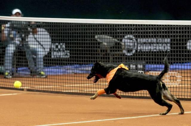 Des chiens pris dans la rue sont amenés sur le terrain de tennis : la raison vous fera sourire
