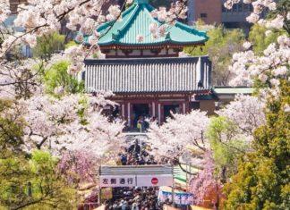 Hanami : l'événement national japonais qui célèbre la floraison printanière ! │ MiniBuzz
