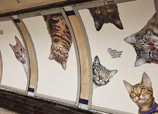 A Londres, les chats envahissent les publicités du métro
