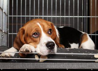 San Francisco force les animaleries à ne vendre des bêtes abandonnées