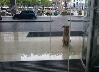 Ce chien errant attend chaque jour une femme devant l'hôtel: Son plan est... Infaillible! │ MiniBuzz