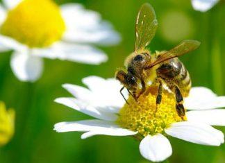 10 gestes simples pour lutter contre la disparition des abeilles │MiniBuzz