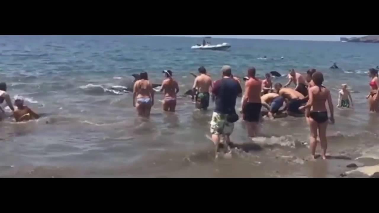 Un groupe de baleines risquait d'être échoué : l'intervention des nageurs va vous émouvoir