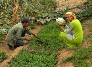 Brachoua : la permaculture sort un village de la misère│ MiniBuzz