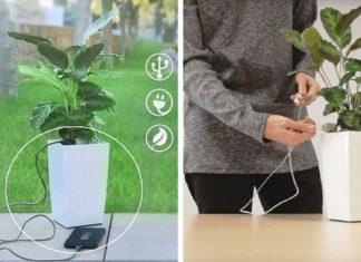 Bioo Lite : une plante verte pour recharger votre smartphone ! │MiniBuzz