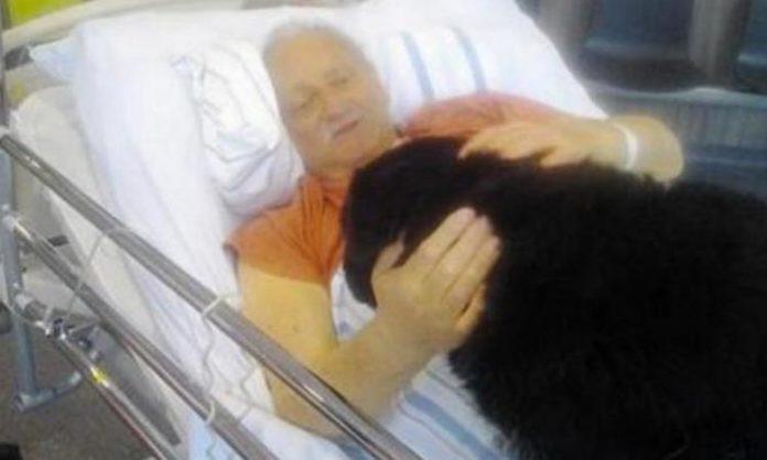 Un Belge en phase terminale obtient l'autorisation de faire ses adieux à son chien à l'hôpital.