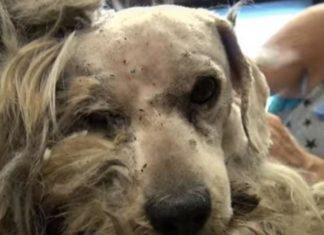 Ce chien abandonné n'a jamais connu l'amour, quand des gens le caressent pour la première fois, c'est trop beau! │MiniBuzz