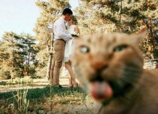 20 photos magnifiques complètement ruinées par des chats, la sixième est hilarante! │ MiniBuzz
