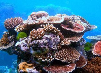 La Grande barrière de corail est déclarée morte après 25 millions d'année d'existence │ MiniBuzz