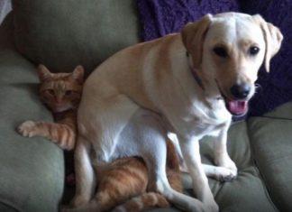 14 photos d'animaux pris en flagrant délit, le cinquième est hilarant! │ MiniBuzz